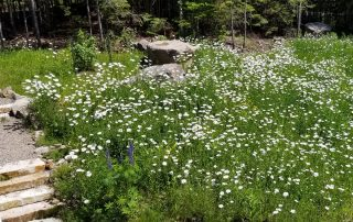 floral indigenous seeding mix in bloom