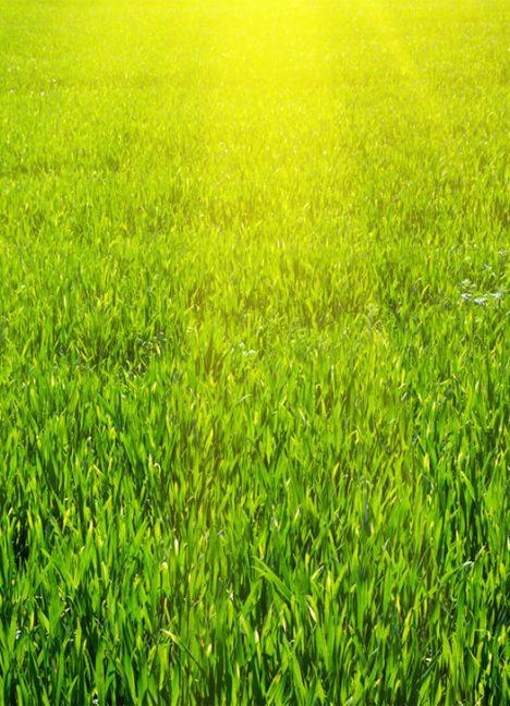 Semences à pelouse et couvre-sols - Semences et paillis d'hydro-ensemencement - Réduction de l'exposition des sols mis à nu - Environnement - Produit de Terraquavie Envionnement & Géosynthétique - Manufacturier de solutions environnementales pour la construction, le génie civil, le génie minier et l'industrie
